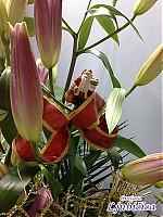 Pogledajte slike Aranžmana u Korpama u našoj galeriji